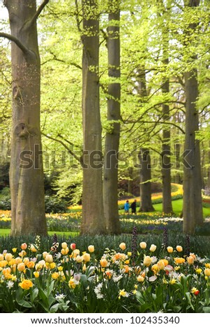 Park with tulips, daffodils and Frittilaria spring flowers under old beechtrees - stock photo