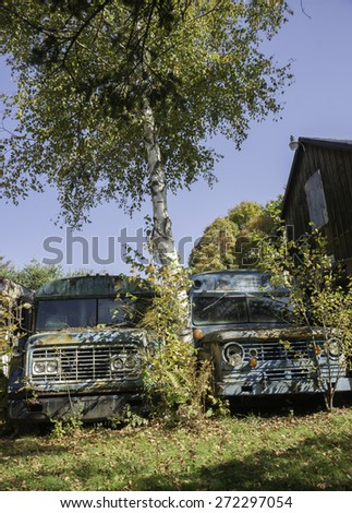 Parked up under a birch tree. Old truck fronts falling apart from a lack of care and interest.  - stock photo