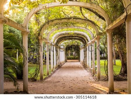 Parkway in Rio de Janeiro Botanical Garden, Brazil. - stock photo