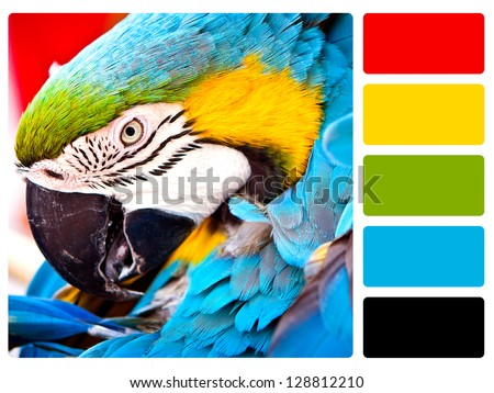 Parrot bird color palette with complimentary swatches. - stock photo
