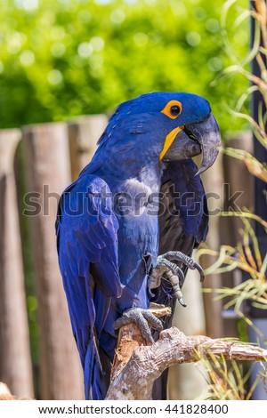 Parrot. Blue macaw. Macro photo. Portrait. Big beak. Multi-colored feathers - stock photo