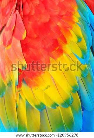 Parrot feathers,  exotic texture - stock photo
