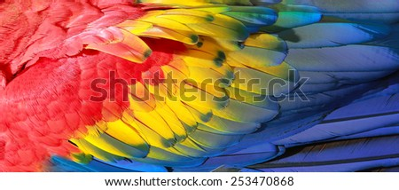 Parrot feathers, red, yellow and blue exotic texture - stock photo