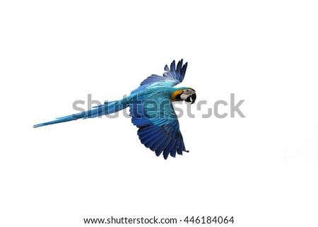Parrot flying on white background - stock photo