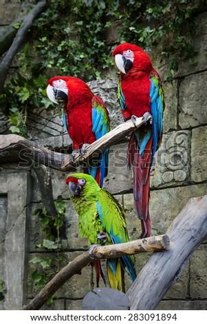 parrot, green, bird, color - stock photo