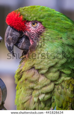 Parrot. Green macaw. Macro photo. Portrait. Big beak. Multi-colored feathers - stock photo
