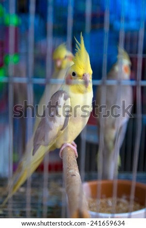 Parrot head white yellow hair clinging twig caught in a cage blue. - stock photo
