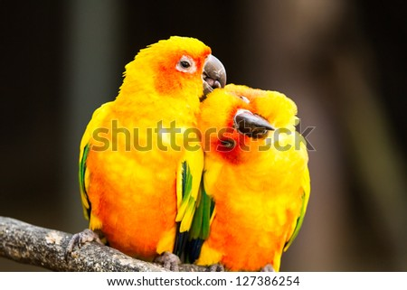 parrot in nightsafari chiangmai Thailand - stock photo