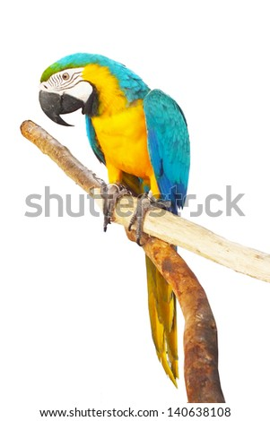 Parrot is standing on branch with isolated.