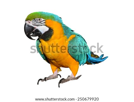 Parrot Isolated on white. Colorful bird. Isolated animal