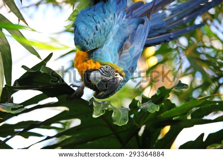 Parrot looking curious - stock photo