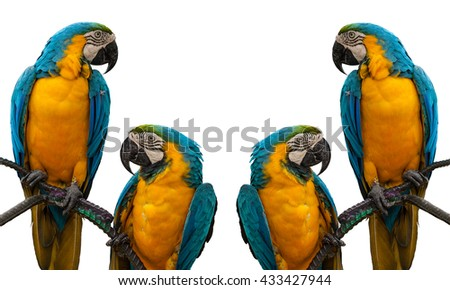 parrot macaw - stock photo