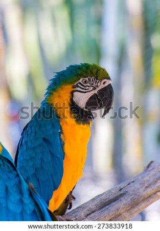 Parrot macaw beautiful color on tree. - stock photo
