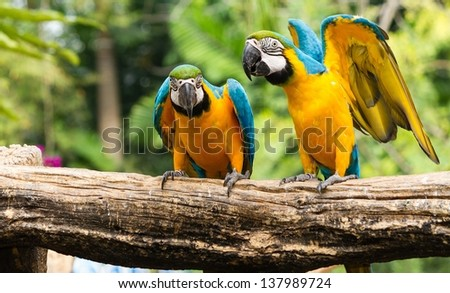 Parrot macaw bird - stock photo