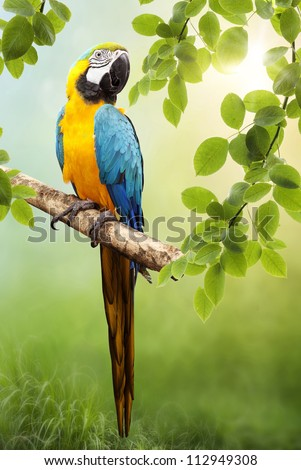 Parrot Macaw in the wild. The background bokeh - stock photo