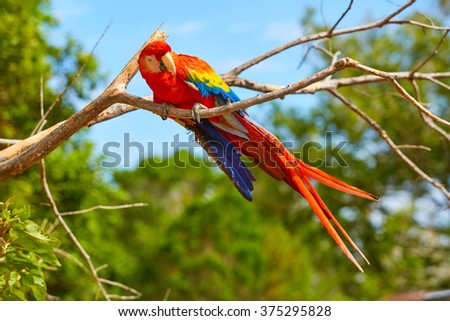 Parrot, Macaw, Panama, Central America - stock photo