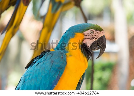 Parrot Macaw photos half the top on soft background blur
