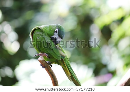 Parrot macaw with green and yellow feathers - stock photo