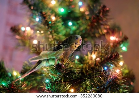 Parrot on the Christmas tree - stock photo