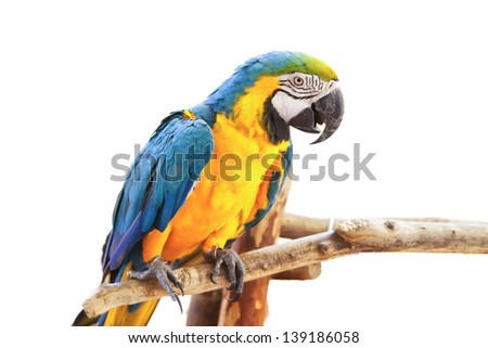 parrot on white background.