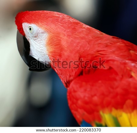 Parrot - Red Blue Macaw - stock photo
