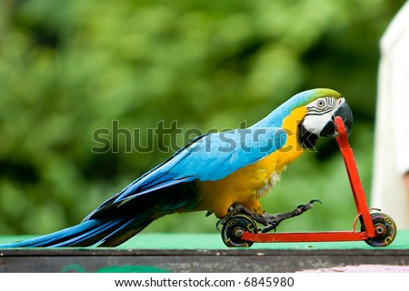 Parrot riding on a bicycle.