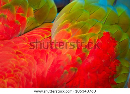 Parrot's feathers background - stock photo