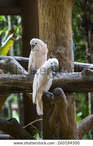 parrot sitting on a branch in nature close-up shot - stock photo