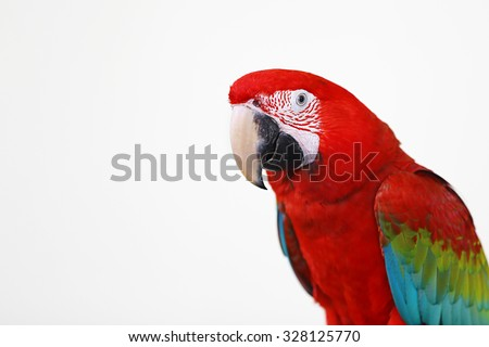 Parrot white background - stock photo