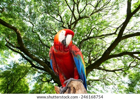 parrots macaw in the forest - stock photo