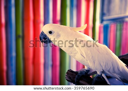 parrots ,Parrots Court ,Colorful parrot ,beautiful parrots,parrots looking,parrots sitting,animals,big parrots,white parrots - Dark tone. - stock photo