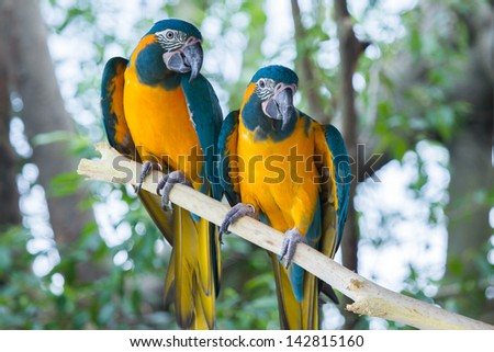 Parrots stand on the tree branch - stock photo