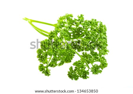 Parsley branch - stock photo