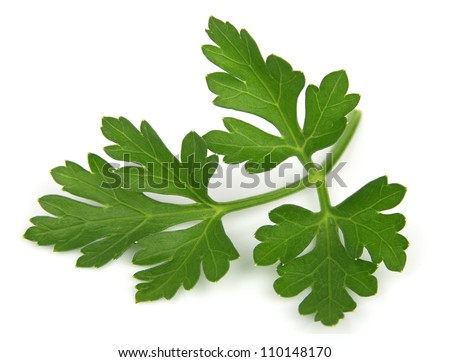 parsley close up on a white background