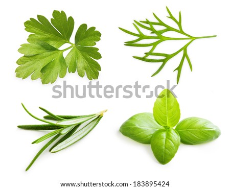 Parsley herb, basil leaves, dill, rosemary spice isolated on white background. - stock photo