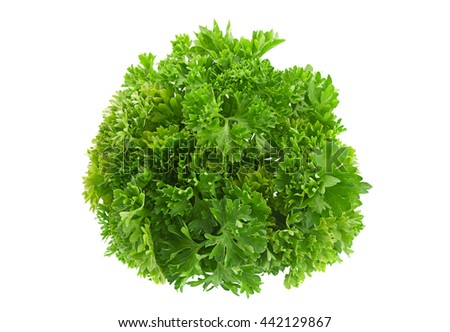Parsley herb closeup isolated on white background
