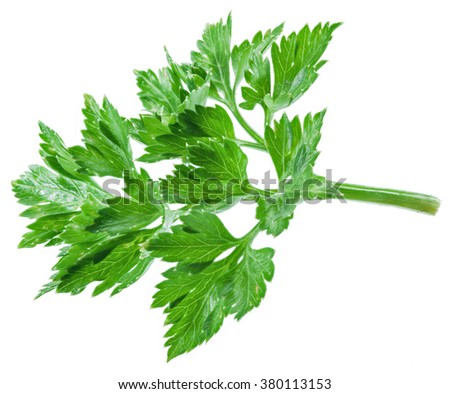 Parsley herb isolated on the white background.