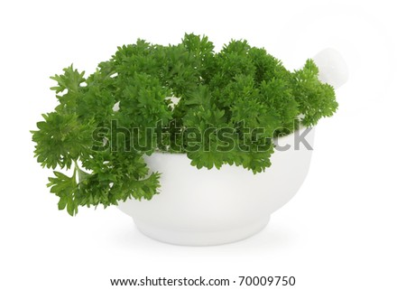 Parsley herb leaf sprigs in a porcelain mortar with pestle, over white background. Petroselinum - stock photo