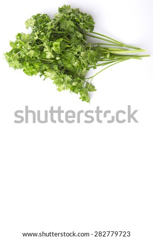 Parsley herb leaves over white background