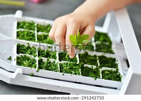 parsley in freezer box - stock photo