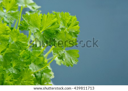 Parsley is Green leafy vegetables useful