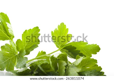 parsley leaves close up on the white - stock photo