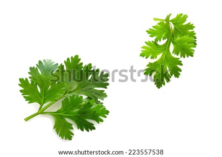 Parsley leaves on white background