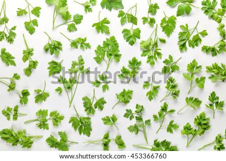 Parsley leaves on white background - stock photo
