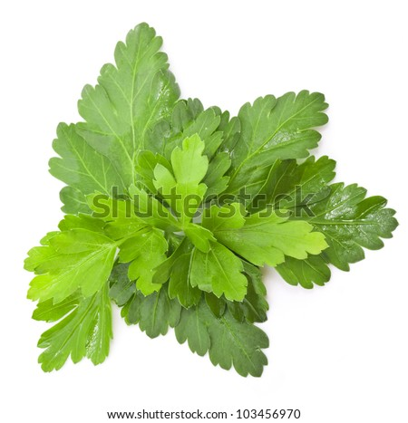 Parsley leaves with a light shadows isolated on white background, closeup - stock photo