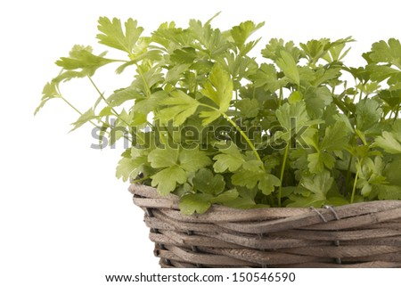 Parsley on a white background - stock photo