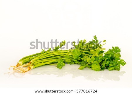 parsley on white table background