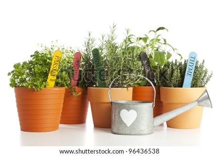 Parsley, Oregano, Rosemary, Sage and Thyme in flower pots with their names on wooden tags, watering can with heart shape in front, isolated on white