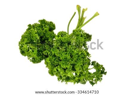 parsley white background 2 - stock photo