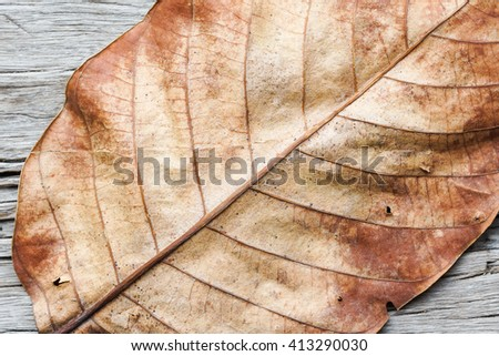 Part of dry leaf on old wood background - stock photo